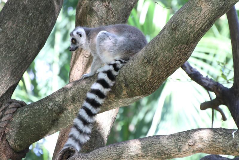 20120312 West Palm Beach Zoo (164)