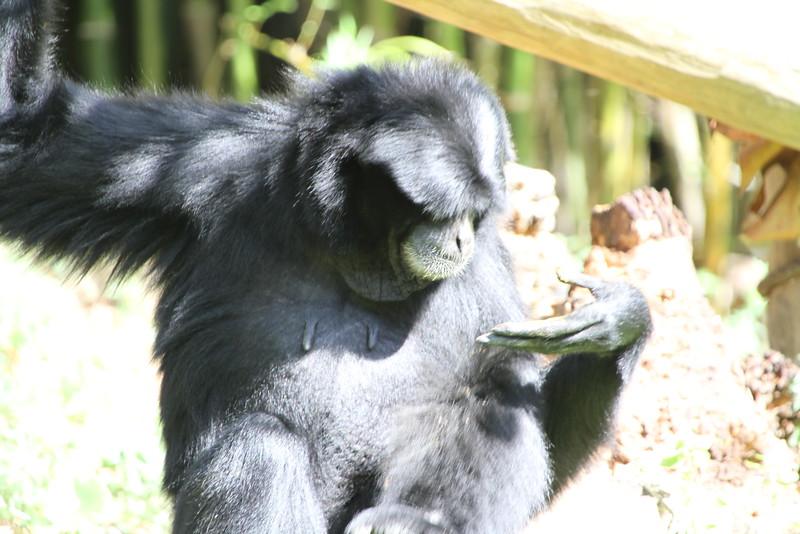 20120312 West Palm Beach Zoo (136)