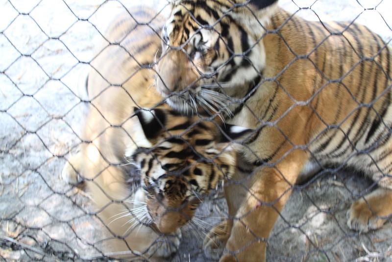 20120312 West Palm Beach Zoo (93)