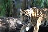 20120312 West Palm Beach Zoo (53)
