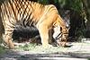 20120312 West Palm Beach Zoo (45)
