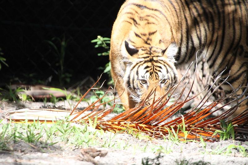 20120312 West Palm Beach Zoo (63)