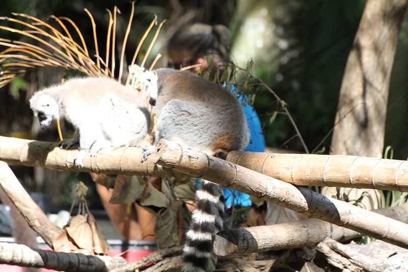 20120312 West Palm Beach Zoo (199)