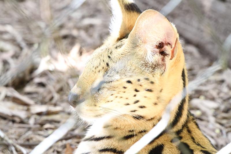 20120312 West Palm Beach Zoo (118)