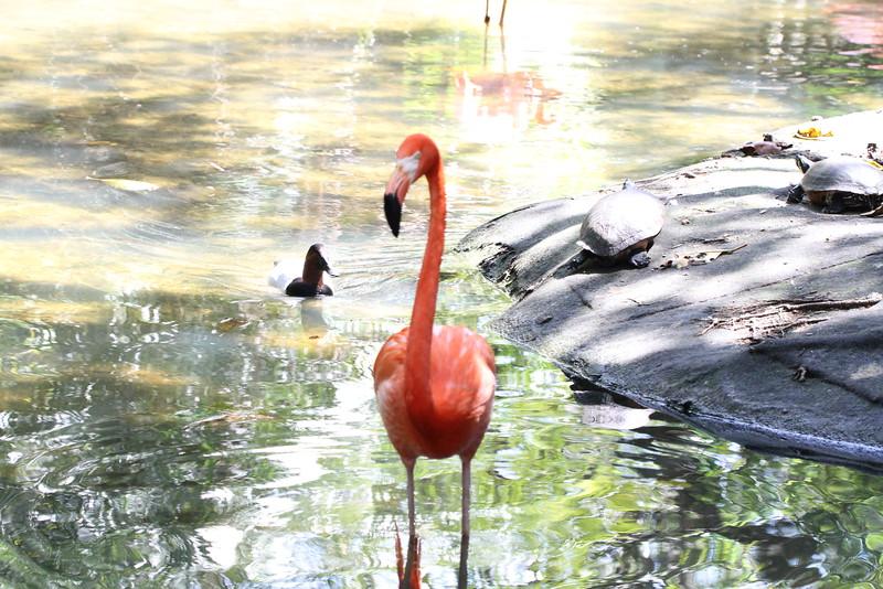 20120312 West Palm Beach Zoo (1)