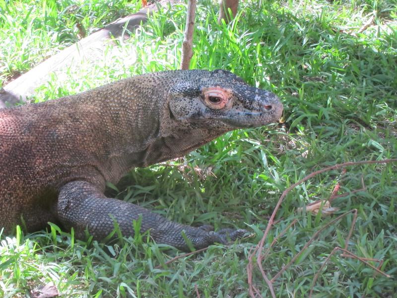 20120312A West Palm Beach Zoo (23)