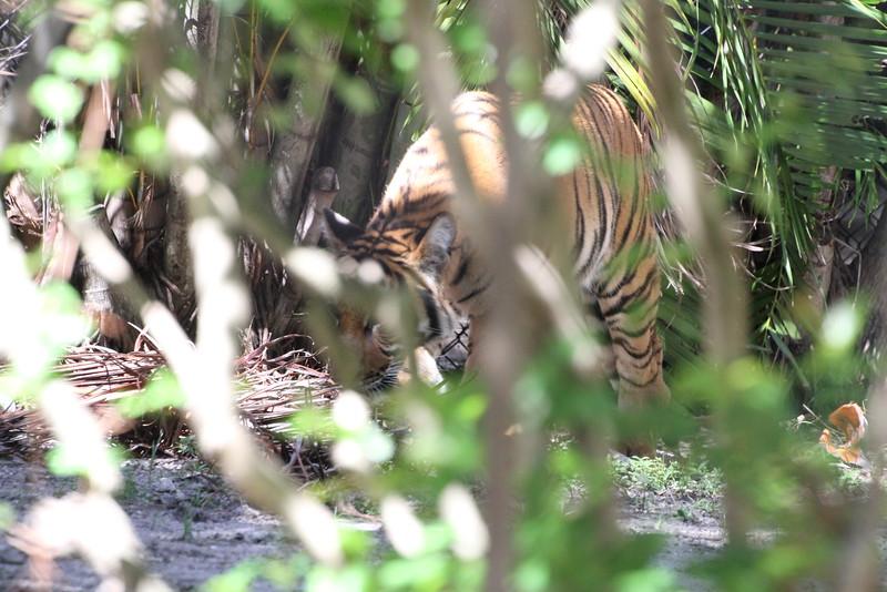 20120312 West Palm Beach Zoo (42)