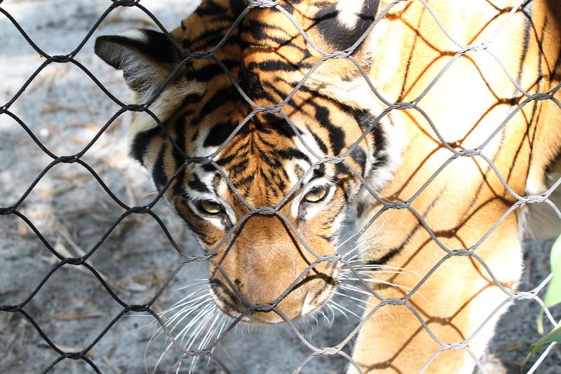 20120312 West Palm Beach Zoo (97)