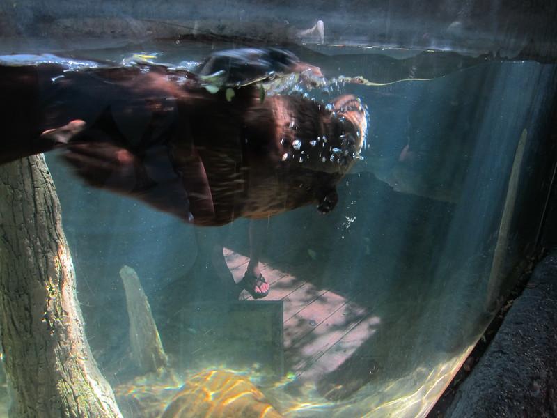 20120312A West Palm Beach Zoo (49)