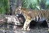 20120312 West Palm Beach Zoo (52)