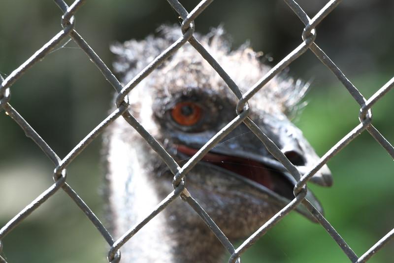 20120312 West Palm Beach Zoo (145)