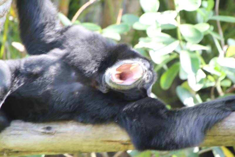 20120312 West Palm Beach Zoo (173)