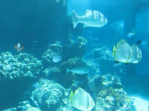Okinawa Churinami aquarium