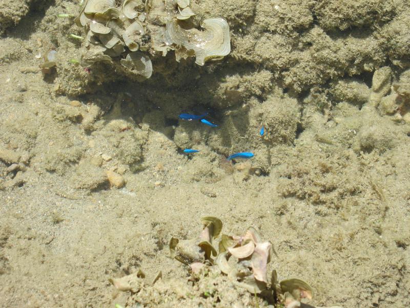 Pretty blue fishies!
