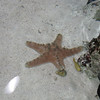 Starfish at the aquarium.  Jessica and Polo saw one of these on the beach earlier in the week.