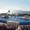 Part of the Dolphin show.