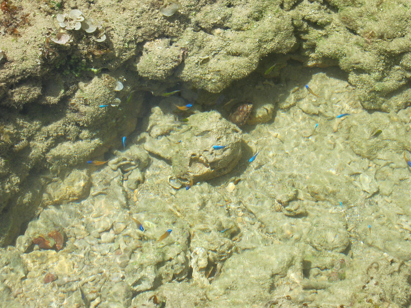 Different variety of fishes.  Blue ones, blue/orange ones, and green ones in the shade near the rocks.