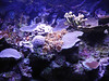 307 The Park coral acquarium