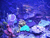 308 The Park coral acquarium