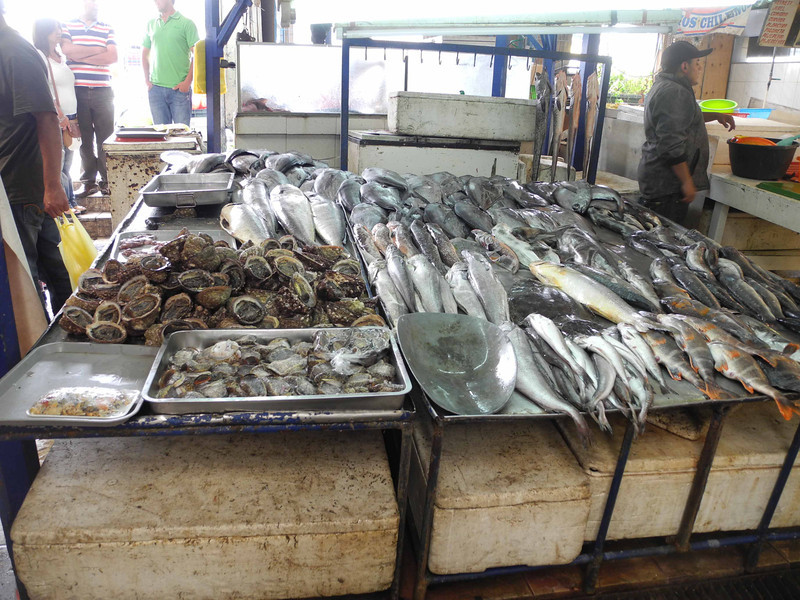 104 Coquimbo fish market