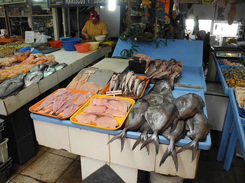 101 Coquimbo fish market