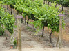 089 Chile's vineyard reqion is between Valpariaso and Santiago