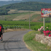 Typical rolling hills of wineries in Burgundy