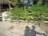 2013 Katie & JoJo Costa Rica (382)
