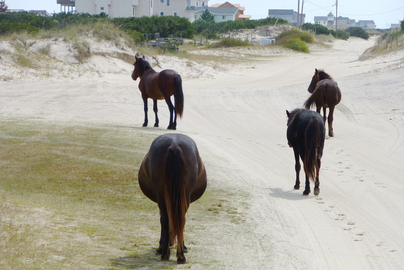 Haven't seen that many horses butts since I retired.