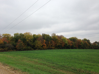 2013 fall leaves in WI (Oct)