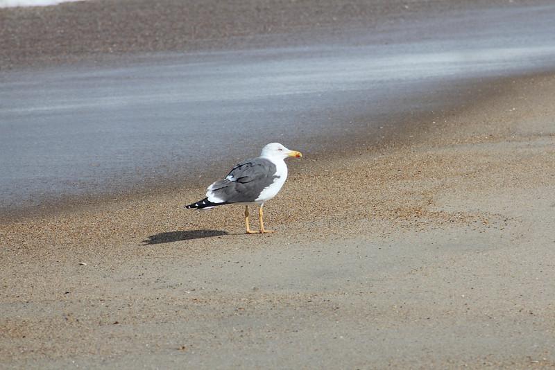 Enjoying the sun and sand!
