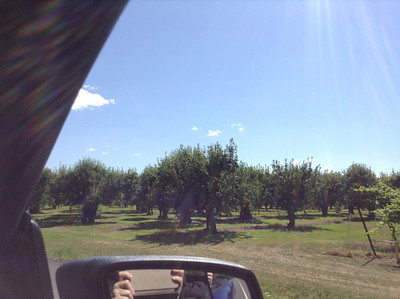 Orchard along the road