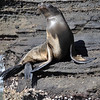 and of course sea lions