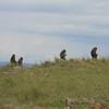 Baboon lookouts?