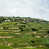 Village and vineyard