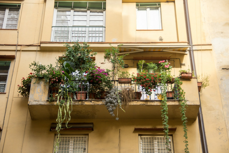 Flowers and balcony