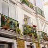 Nice windows and flowers