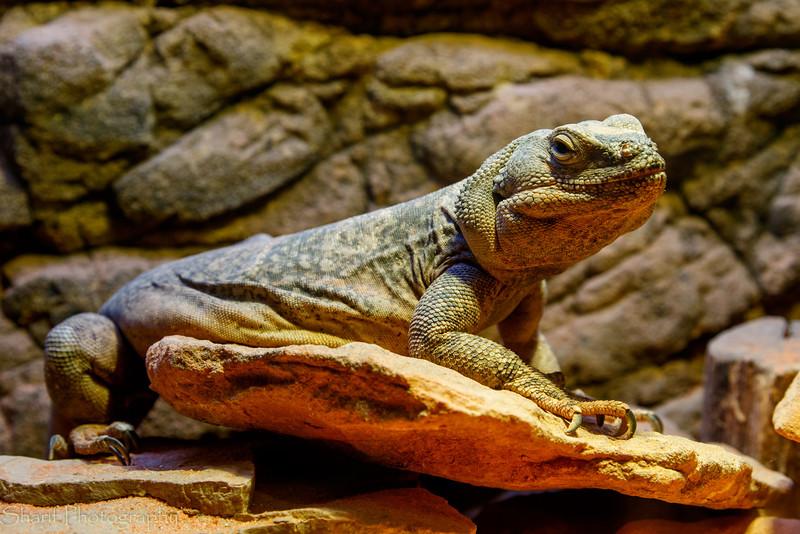 Lizard in terrarium