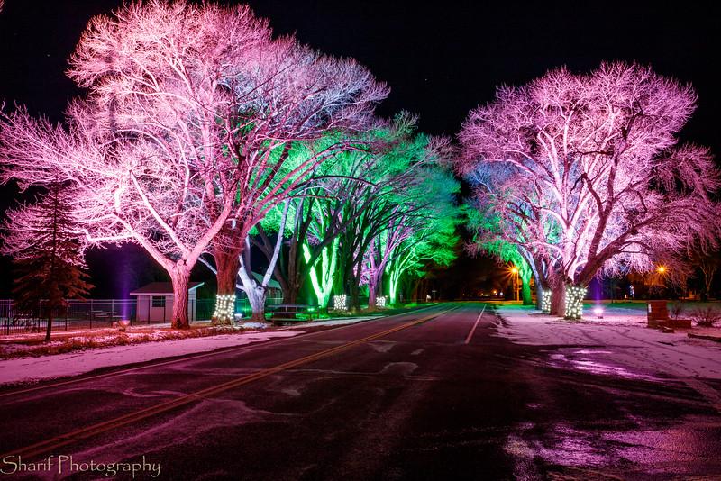 Festive tree lighting