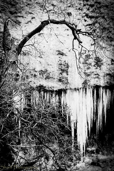 Tree and icicles - haunted