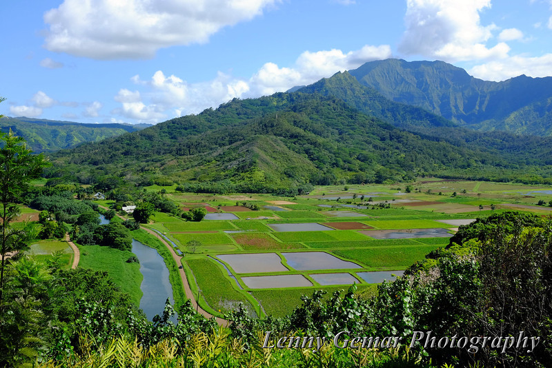 Hanalei river valley.
