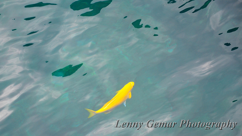The fish swim around our boat, tantalizing the waiting snorkelers.