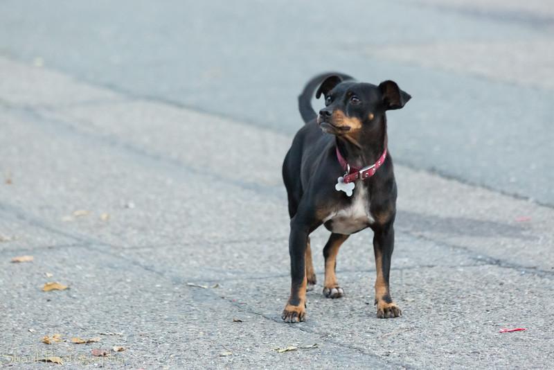 Playful dog.