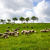 On our way to Stuttgart, we saw this beautiful meadow with grazing sheep