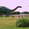 Apatosaurus (70 feet) and Tyrannosaurus rex (45 feet) Dinosaur Exhibit Near the Park Store