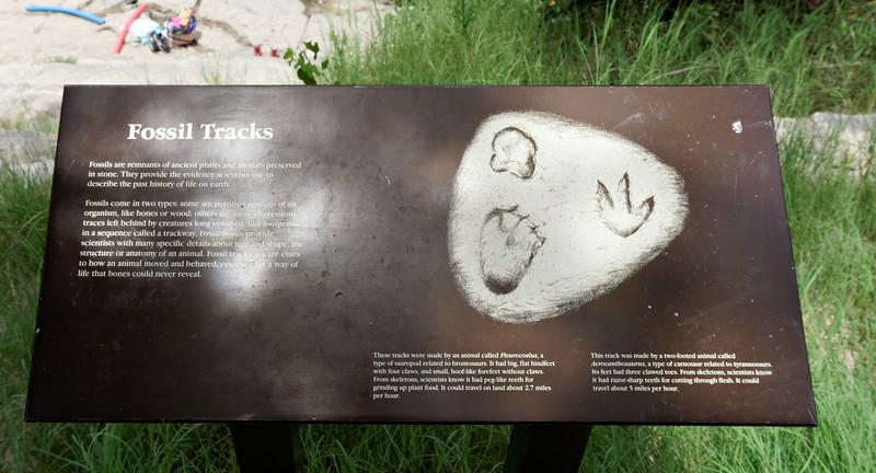 Overlook No. 2 Fossil Tracks Description