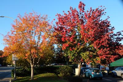 Beautiful fall colors in Sacramento