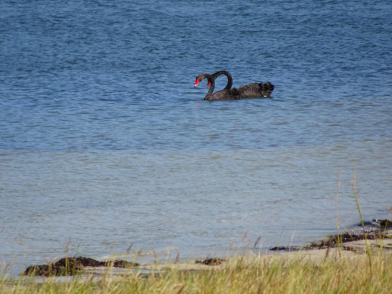 683 Black swans