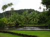 886 The Jardin Botanique on Tahiti