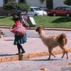 May 9, 2016   Llama with its owner